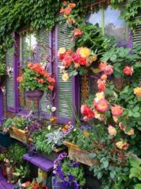 Purple shutters and roses