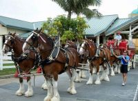 06-12-05-SeaWorld-Clydesdales-large