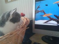 Ash - Enjoying the 'Videos for your cat' YouTube channel!