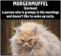 Are You a Morgenmuffel?
