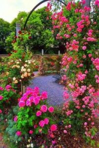 Magnificient Rose Garden.