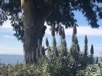 Lupins flowers-4.jpeg