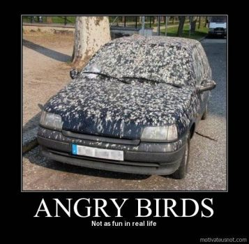 Angry birds!  Looks like they were REALLY angry!