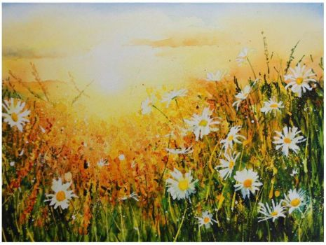 ~Daisies in dazzling sunlight~