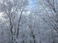 Kentucky Trees in Winter