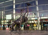 Giraffes - Edinburgh