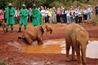 David Sheldrick Elephant Orphanage Nairobi