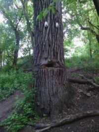 surprised tree