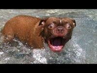 Surprised dog in water