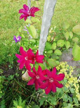 Beauty in my sister's garden