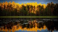 Lake reflection of sunlit trees and stormy sky