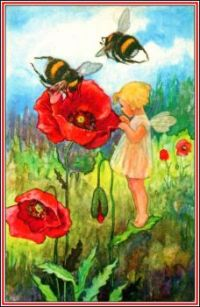 Inspecting the Poppies (smaller size)