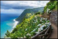 ~Costal Path With Hydrangeas~