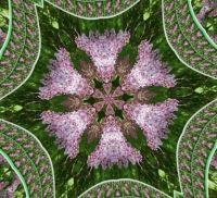 11.5.2021 - Serík / Lilac - Kaleido
