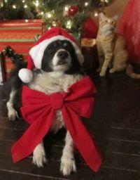 Suzie & Cooter hear Santa coming