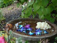 Special bird bath