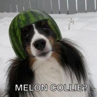 Melon Collie