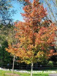 Happy_Autumn