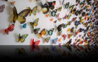 Butterflies by Kristi Malkoff