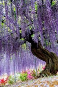 Ashikaga Flower Park in Tochigi Japan.
