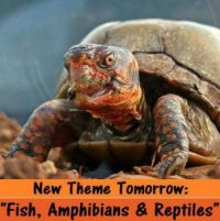 """New Multi-Theme Tomorrow:  Fish, Amphibians, Insects & Reptiles """"  Have Fun"""