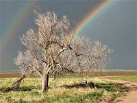 Double Rainbows & Cottonwood