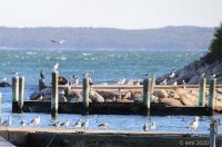 Gulls On Docks