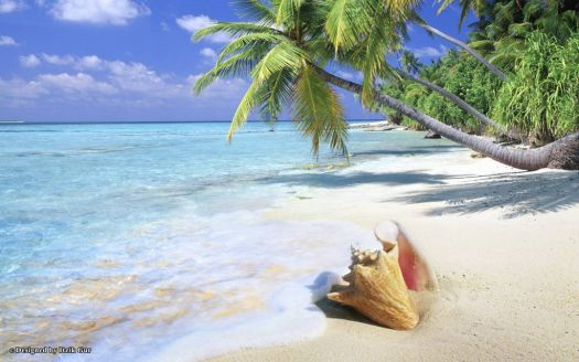 Tropical beach and shell....