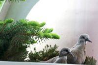 balkonoví nájemníci