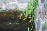 najdi žábu 2 / find the frog 2