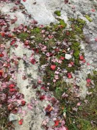 Lichen, Leaves, and Moss on Rock