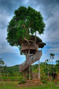 Tree house , Phillippined