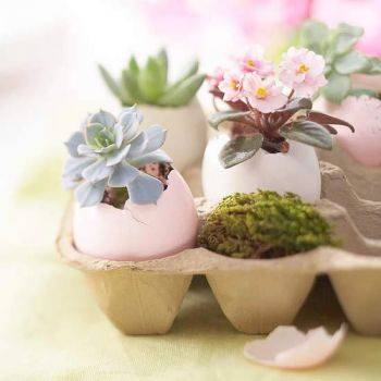 Succulents and Flowers in egg shells. For Sis!