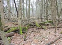 Walkabout: Old Rail Fence in the Woods