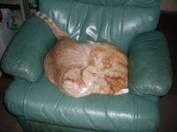 we do like the recliner,  but the bed has an electric blanket