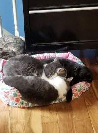 Group Snuggle