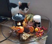 Cat arranger