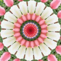 kaleidoscope 315 white tulips small
