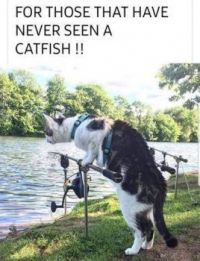 For those that have never seen a cat fish