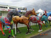 Races in Cairns