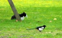 Poes en vogel 4- I dont see him-there is no birdy.