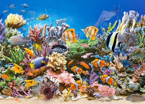 barvy oceanu