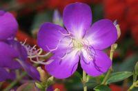 te male flower