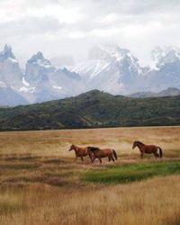 Torres Del Paine National Park, Magallanes Region, Chile