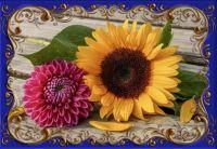 květina_25444 (4)