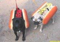 HOT DOGS ?