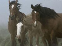 Horses in the Winds of Chilean Patagonia