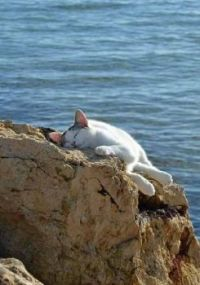 nap time, anywhere you are