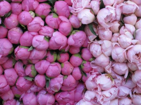 Peonies, Market at Place Maubert
