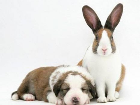 We are family; my,my,my,my bunnie and me